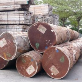 AFROMOSIA WOOD LOGS FOR SALE