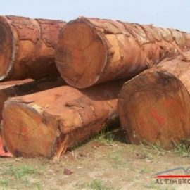 DOUSSIE WOOD LOGS FOR SALE