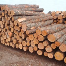 SPRUCE WOOD LOGS FOR SALE
